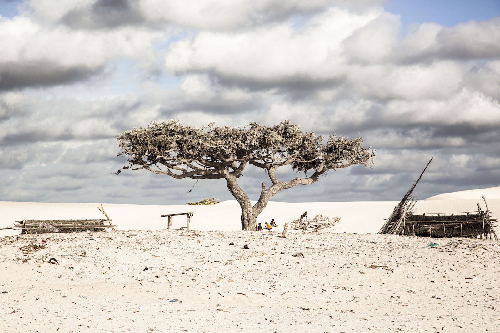 tirage photo arbre de vie chez les vezos de madagascar