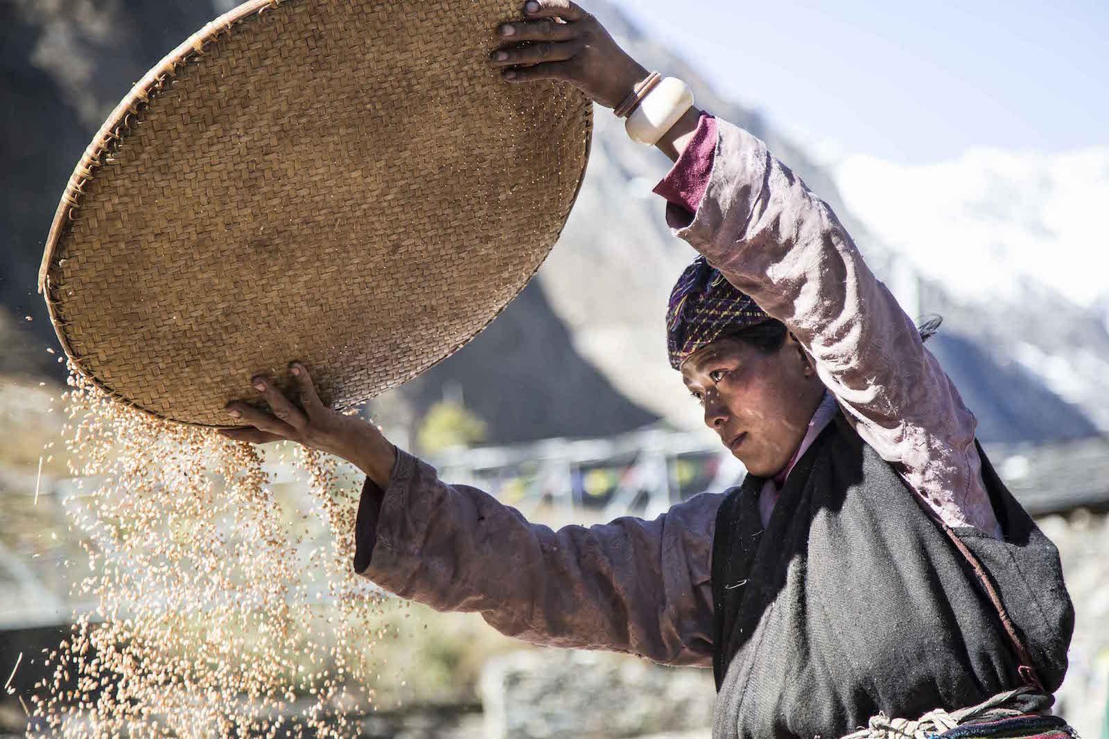 tirage photo cereales chez les tsumbas du nepal