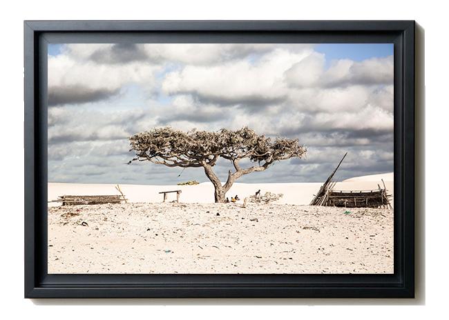arbre-de-vie-caisse-americaine